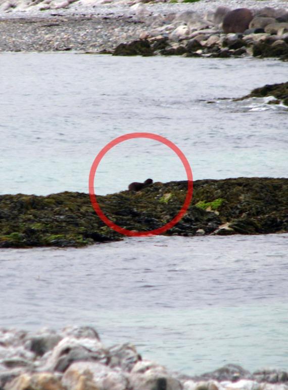 Der Seeotter hat sicher etwas gefangen. Wir blieben heute bis auf die Aliens leer aus.