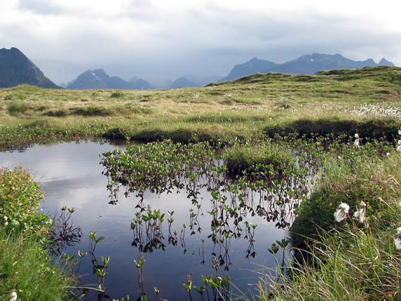 Die Landschaft in der Nähe des Camps ist sumpfig und artenreich.