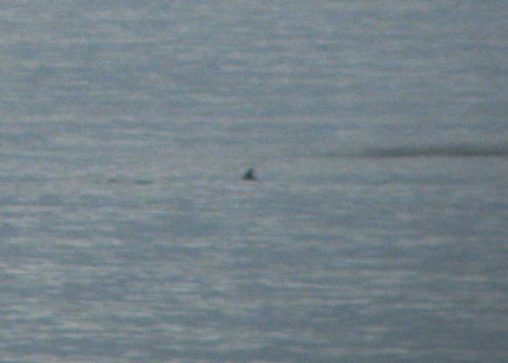 Das ist eine Walflosse. Glaube ich.