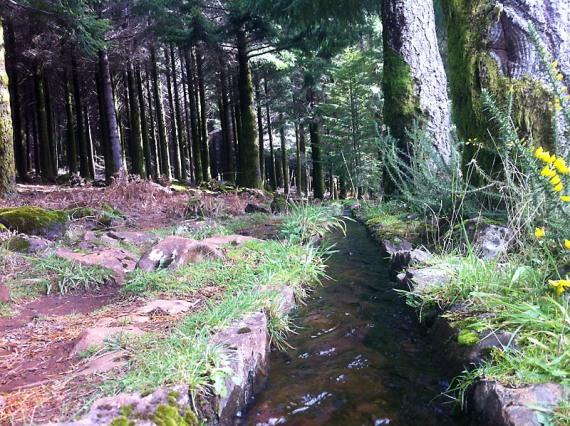 Märchenwald – mit Levada