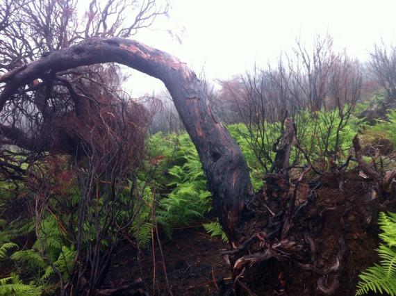 Hier hat vor kurzem ein Waldbrand gewütet