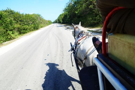 Die Straße zum Playa Los Flamencos, Cayo Coco
